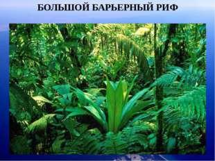 БОЛЬШОЙ БАРЬЕРНЫЙ РИФ Ожерелье островов простирается на 2000 км от Папуа - Но