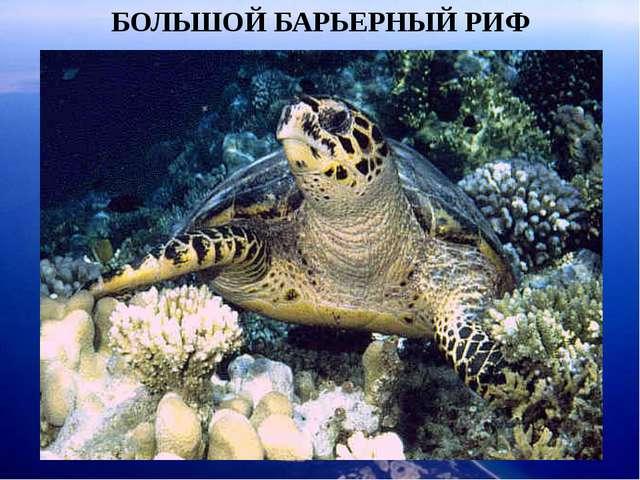 БОЛЬШОЙ БАРЬЕРНЫЙ РИФ Огромное число видов акул, анемоний и губок, морских зв...
