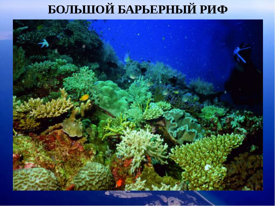 БОЛЬШОЙ БАРЬЕРНЫЙ РИФ Неповторимое зрелище ждет Вас в подводном мире островов...