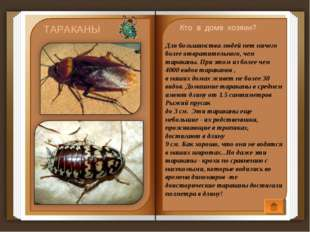 Для большинства людей нет ничего более отвратительного, чем тараканы. При эт