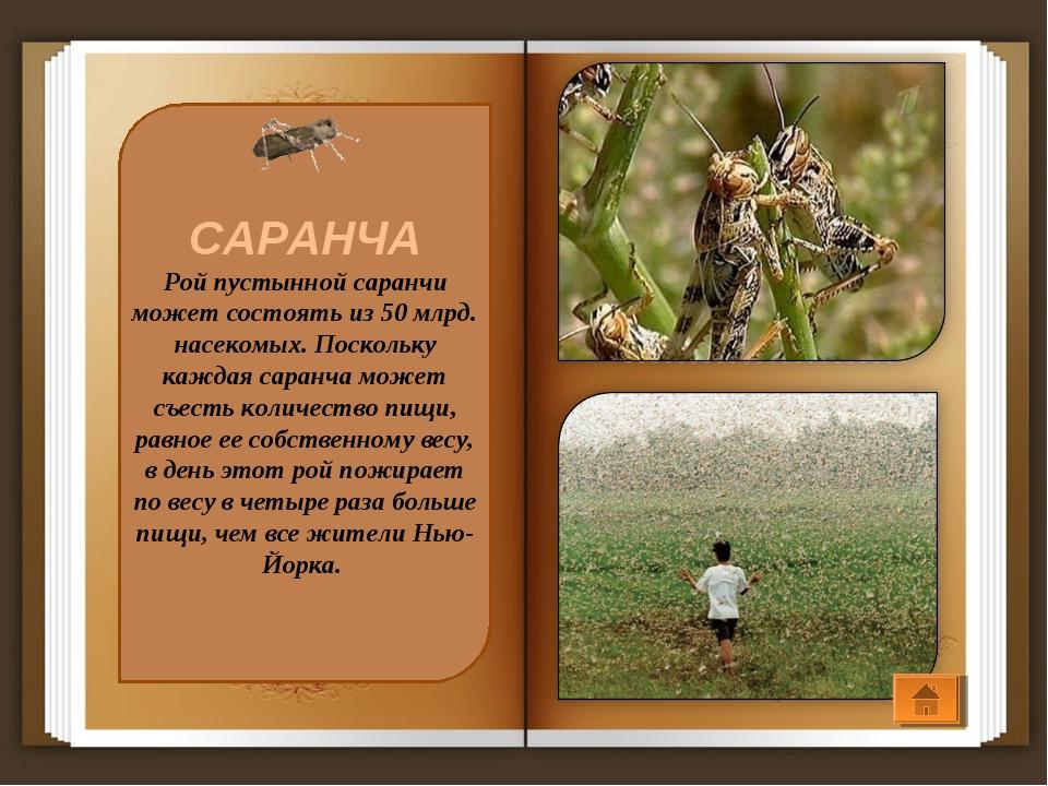 САРАНЧА Рой пустынной саранчи может состоять из 50 млрд. насекомых. Поскольку...