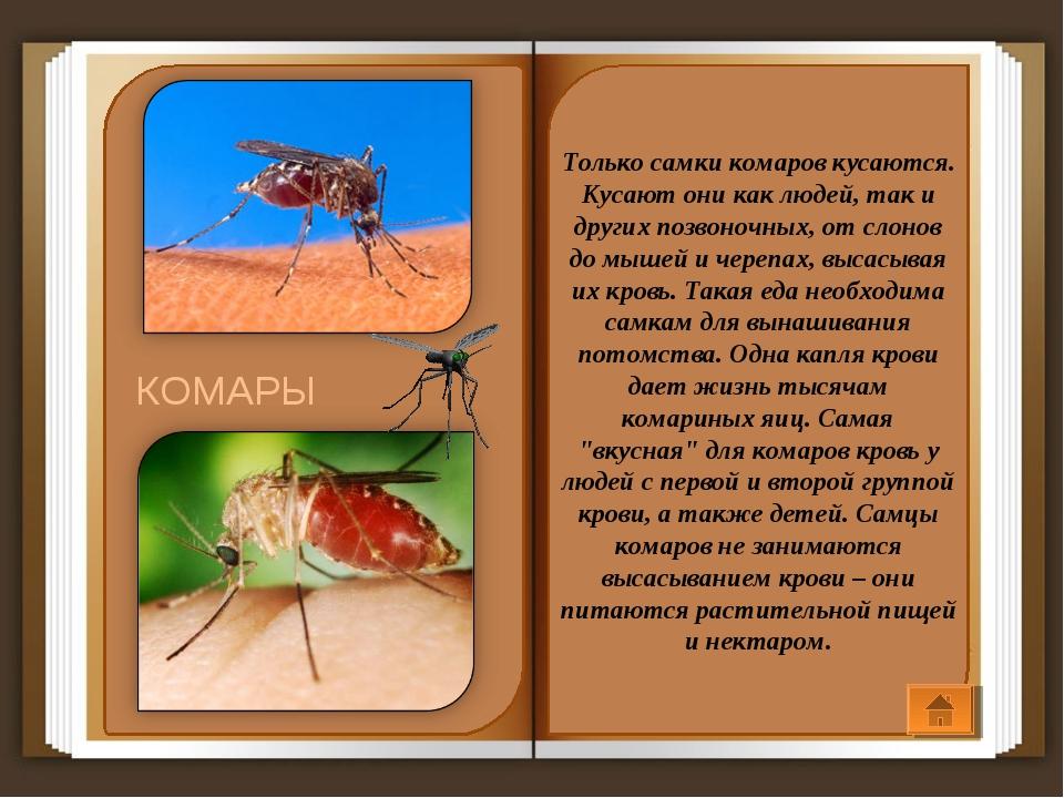 Только самки комаров кусаются. Кусают они как людей, так и других позвоночных...