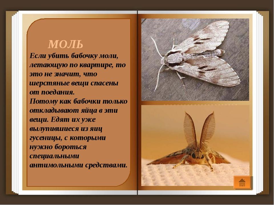 МОЛЬ Если убить бабочку моли, летающую по квартире, то это не значит, что ше...