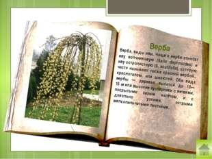 Крапива (лат. Urtīca) — род цветковых растений семейства крапивные. Стебли и
