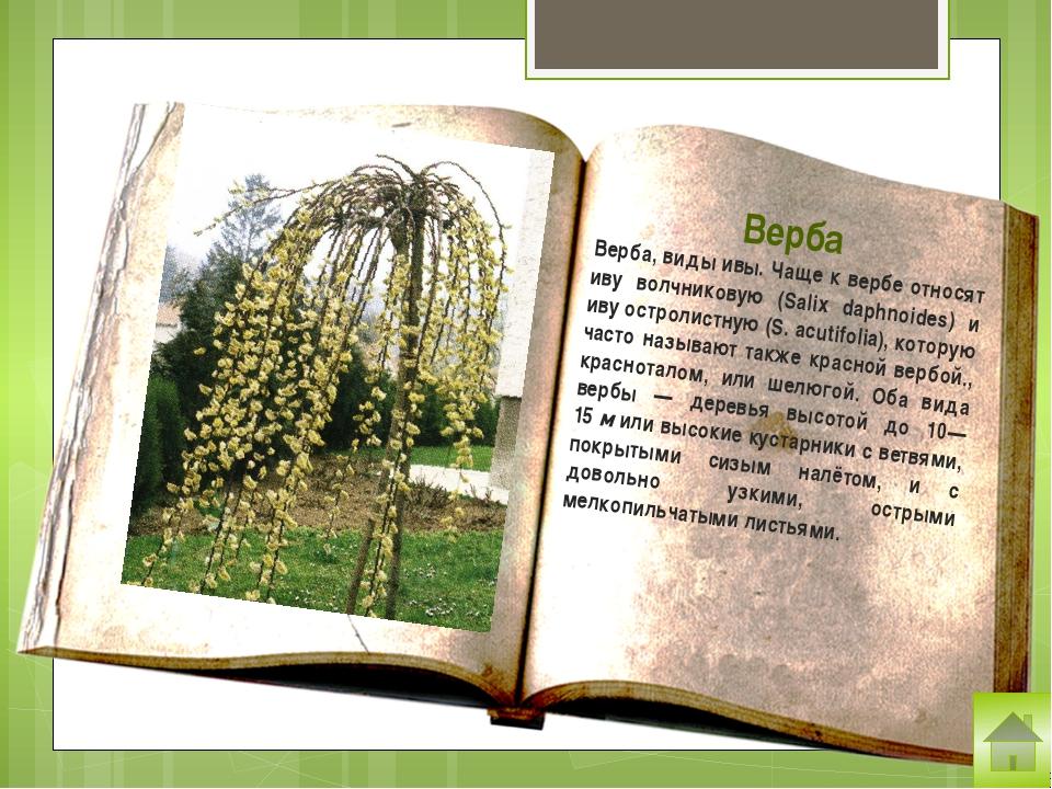 Крапива (лат. Urtīca) — род цветковых растений семейства крапивные. Стебли и...
