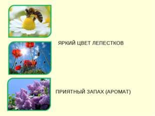 ЯРКИЙ ЦВЕТ ЛЕПЕСТКОВ ПРИЯТНЫЙ ЗАПАХ (АРОМАТ)