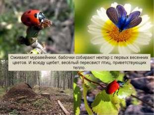 Оживают муравейники, бабочки собирают нектар с первых весенних цветов. И всюд