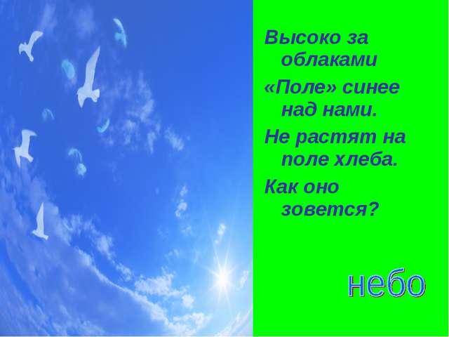 Высоко за облаками «Поле» синее над нами. Не растят на поле хлеба. Как оно зо...