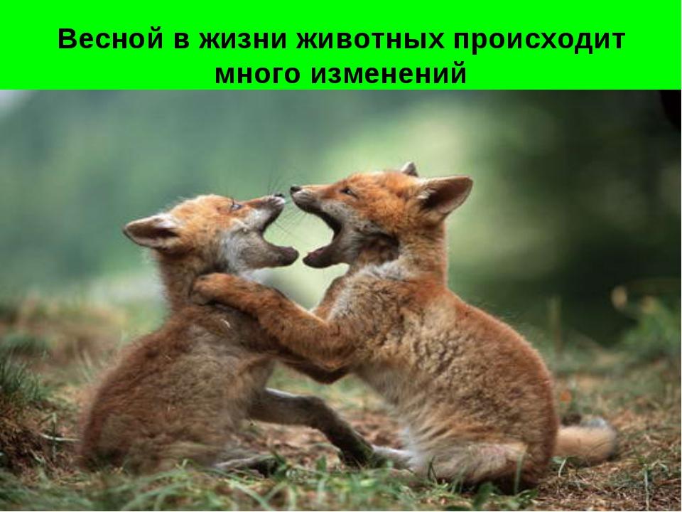 Весной в жизни животных происходит много изменений