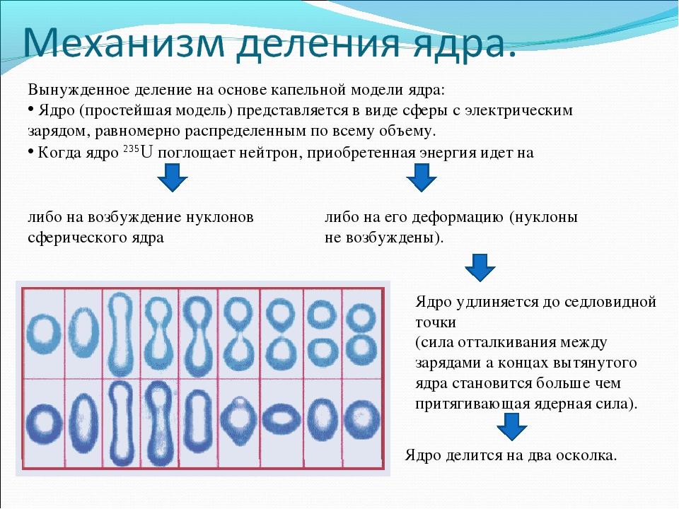 Вынужденное деление на основе капельной модели ядра: Ядро (простейшая модель)...