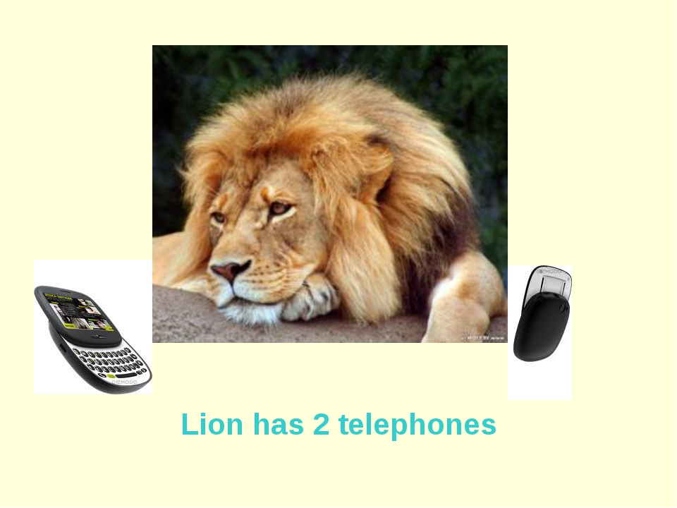 Lion has 2 telephones