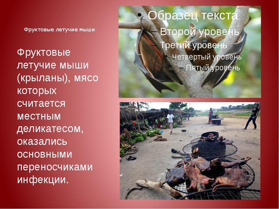 Фруктовые летучие мыши. Фруктовые летучие мыши (крыланы), мясо которых считае...