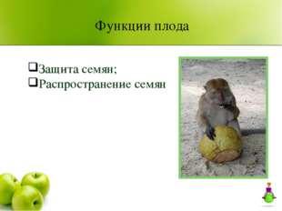 Защита семян; Распространение семян Функции плода