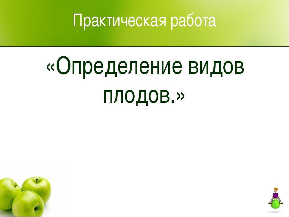 Практическая работа «Определение видов плодов.»