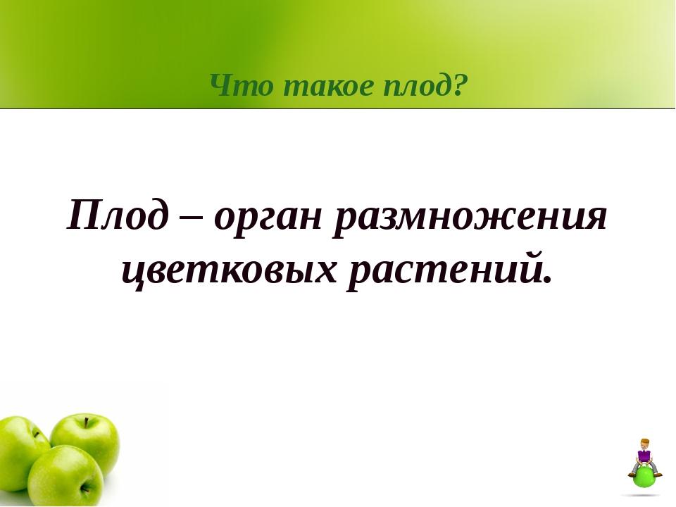 Что такое плод? Плод – орган размножения цветковых растений.