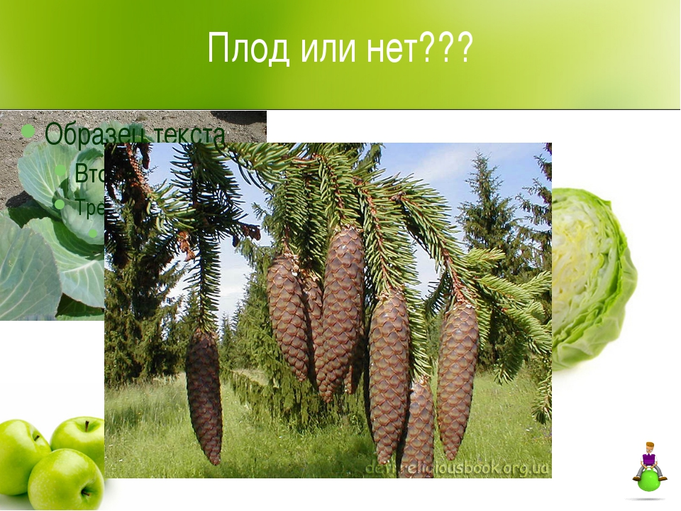 Плод или нет???