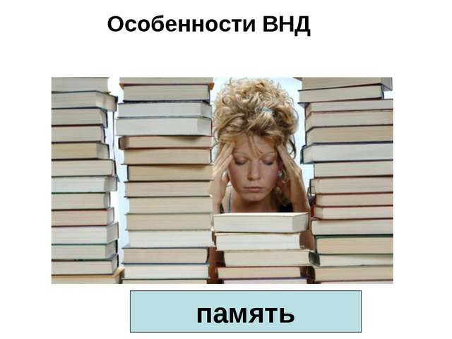 Особенности ВНД память