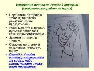 Измерение пульса на лучевой артерии (практическая работа в парах) Пережмите а