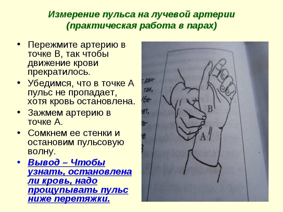Измерение пульса на лучевой артерии (практическая работа в парах) Пережмите а...