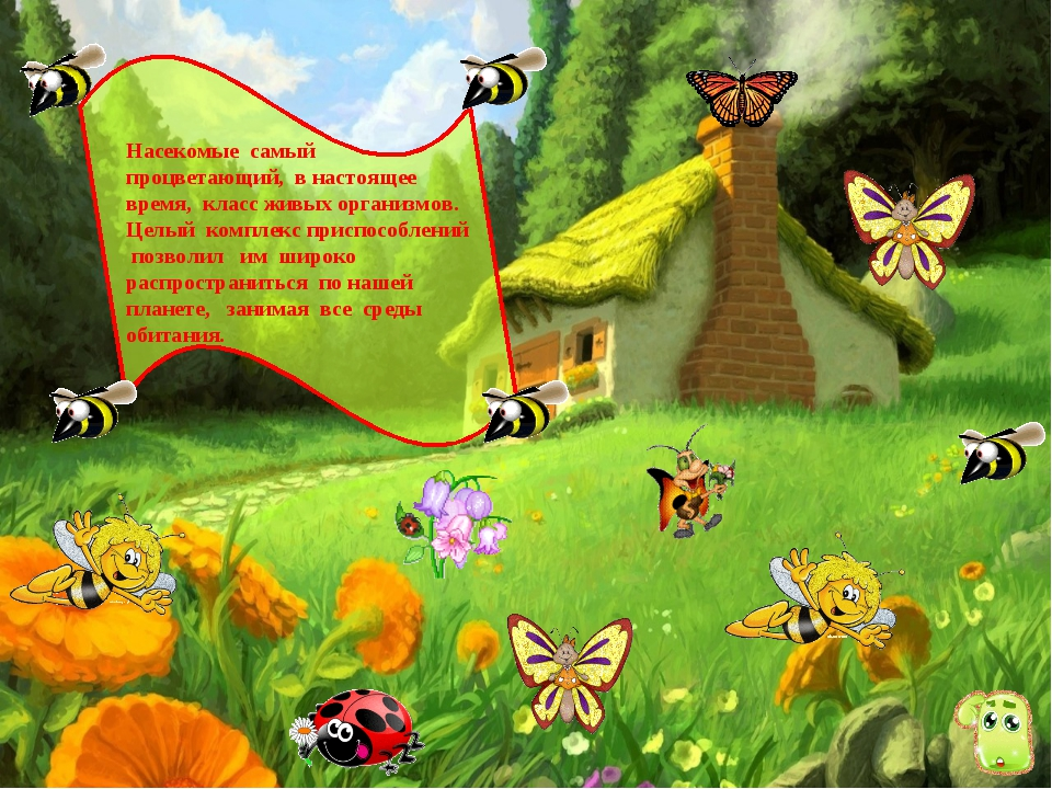 Насекомые самый процветающий, в настоящее время, класс живых организмов. Целы...
