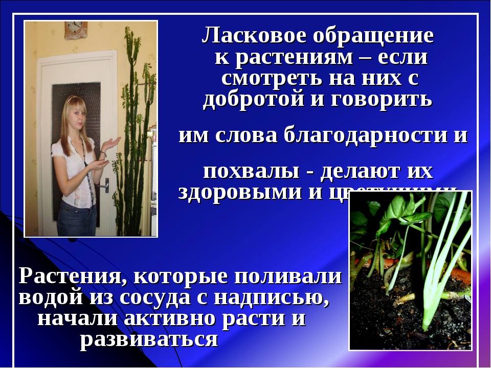 Ласковое обращение к растениям – если смотреть на них с добротой и говорить...