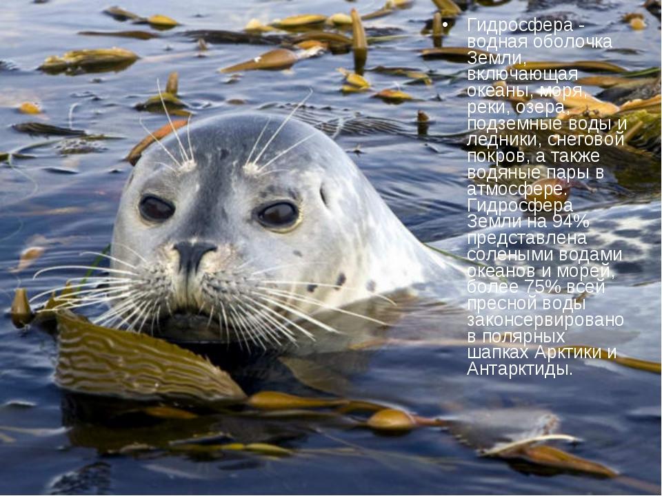 Гидросфера - водная оболочка Земли, включающая океаны, моря, реки, озера, под...
