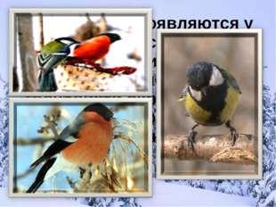 Эти птицы появляются у нас вместе со снегом. Их красные грудки, чёрные барх