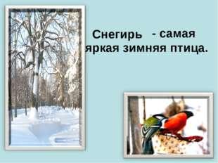- самая яркая зимняя птица. Снегирь