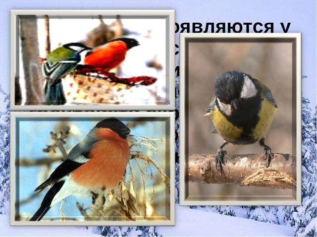Эти птицы появляются у нас вместе со снегом. Их красные грудки, чёрные барх...