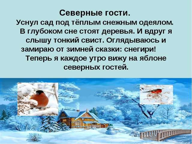 Северные гости. Уснул сад под тёплым снежным одеялом. В глубоком сне стоят де...