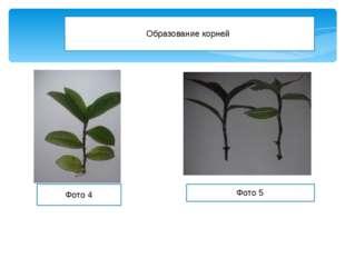 Образование корней Фото 4 Фото 5