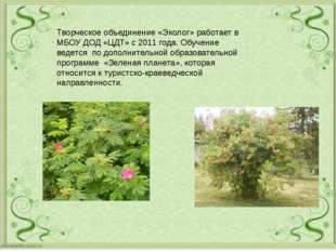 . Творческое объединение «Эколог» работает в МБОУ ДОД «ЦДТ» с 2011 года. Обу