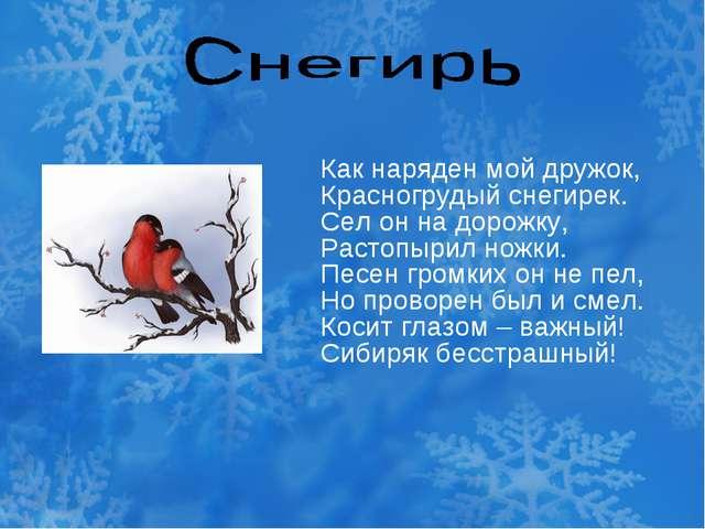 Как наряден мой дружок, Красногрудый снегирек. Сел он на дорожку, Растопырил...