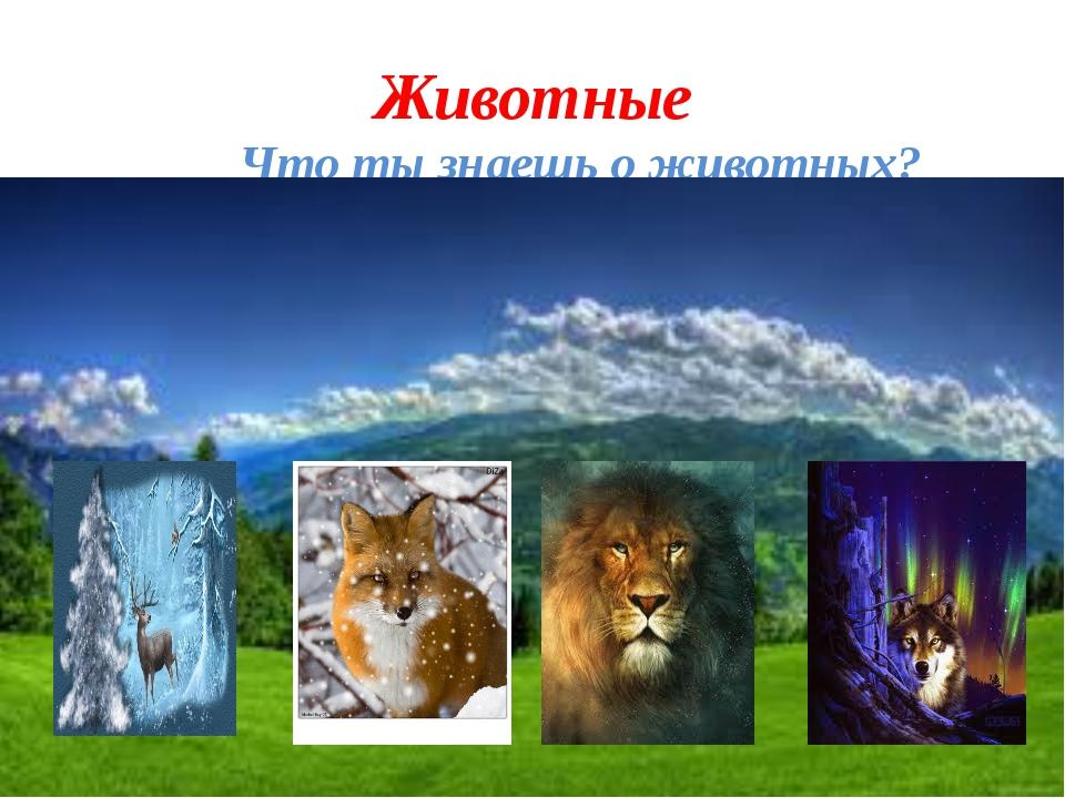 Животные Что ты знаешь о животных?
