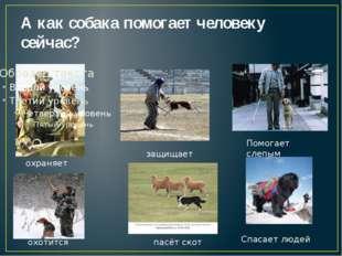 А как собака помогает человеку сейчас? охраняет охотится пасёт скот Помогает