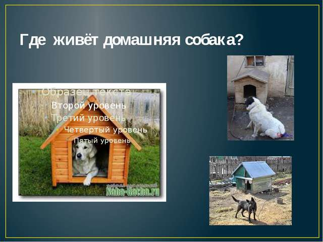 Где живёт домашняя собака?
