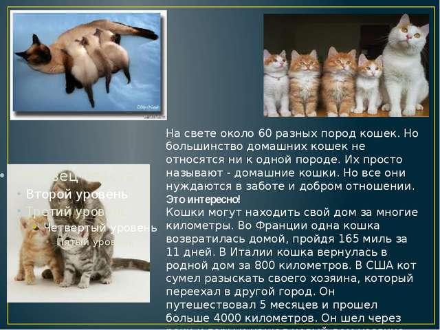 На свете около 60 разных пород кошек. Но большинство домашних кошек не относ...