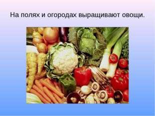 На полях и огородах выращивают овощи.