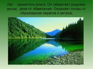Лес - хранитель влаги. Он оберегает родники, ручьи, реки от обмеления. Охраня