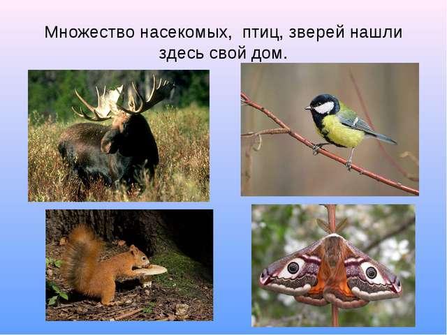 Множество насекомых, птиц, зверей нашли здесь свой дом.