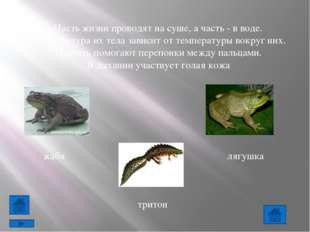 Большинство земноводных рождается в воде и до превращения во взрослое животно