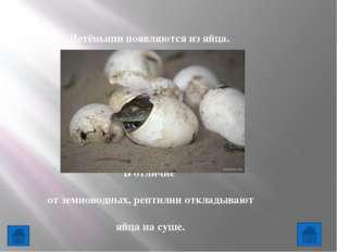 7.Животные - это ...   К насекомым относятся: Птицы, звери, насекомые, ры