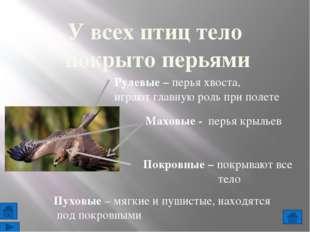 9. Отметь щелчком мыши верные высказывания: 10. Выберите правильный ответ: жи