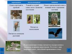 Использованы фотографии животных: http://materukhin.ru/?bba=pictures-of-cater