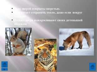 http://s004.radikal.ru/i205/1101/14/750e0f95fa96.jpg - тигр http://www.proza.