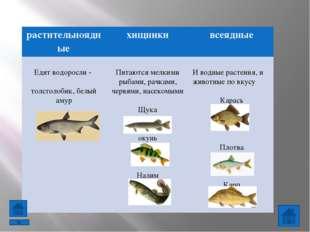 Проверь себя Узнай животное по описанию: У животного 6 ног, тело разделено На