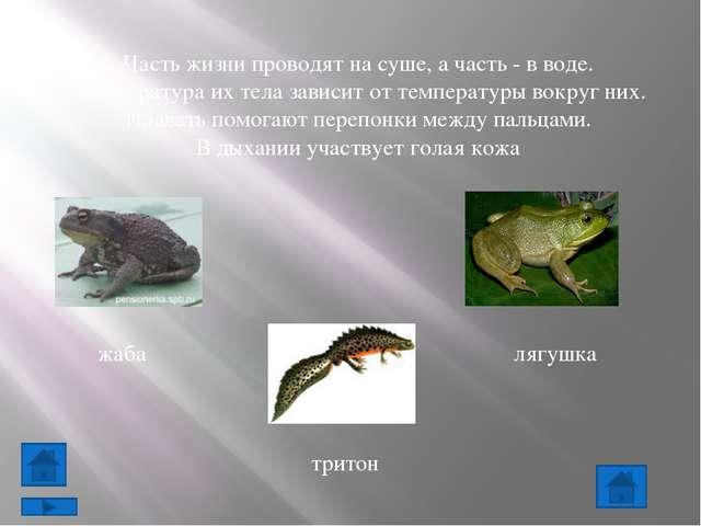 Большинство земноводных рождается в воде и до превращения во взрослое животно...