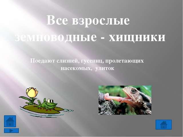 Все пресмыкающиеся в основном хищники. Ящерицы охотятся на насекомых и пауков...