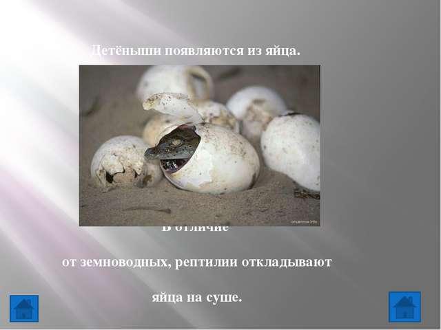 7.Животные - это ...   К насекомым относятся: Птицы, звери, насекомые, ры...