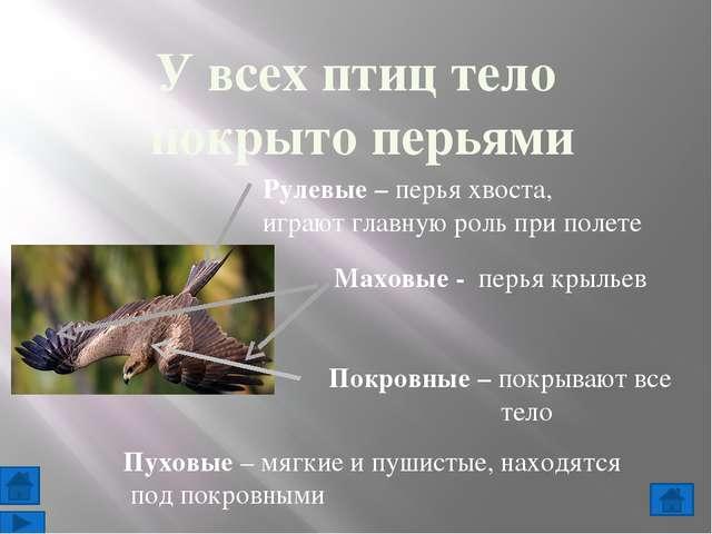 9. Отметь щелчком мыши верные высказывания: 10. Выберите правильный ответ: жи...